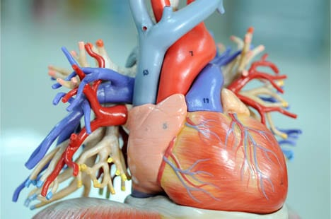 what is a cardiologist
